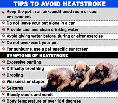 Dog Heat Stroke Long Term Effects - http://pets-ok.com/dog-heat-stroke-long-term-effects-dogs-2654.html