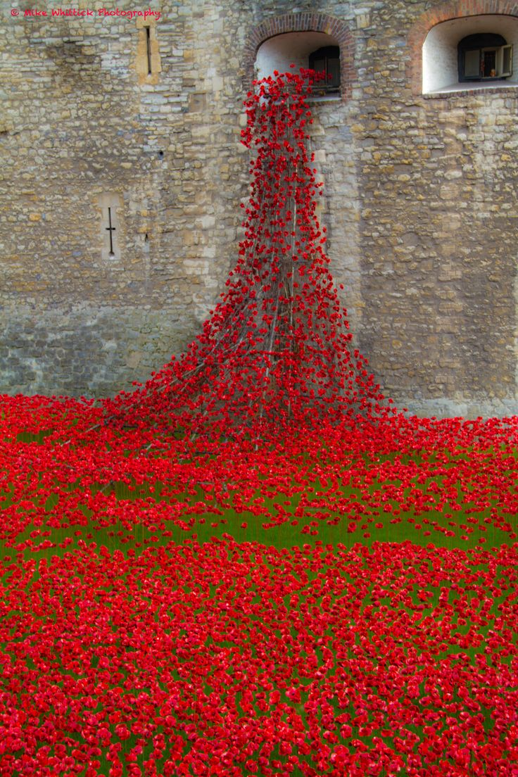 Poppies at Tower of London. 2014