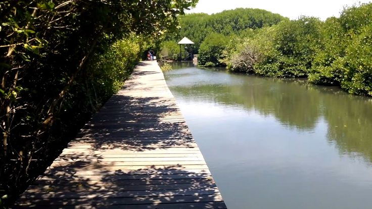 Review Travel Guide: Hutan Mangrove Bali Indonesia (Mangrove Forest Tour...