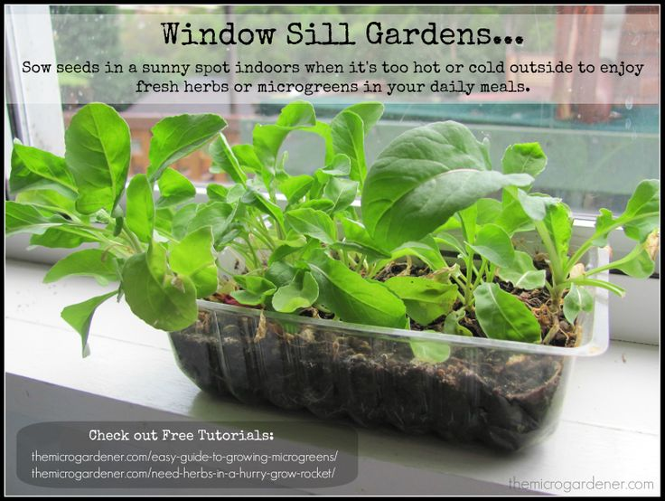 17 best images about indoor gardens on pinterest gardens the plant and health - Houseplants thrive low light youre window sill ...
