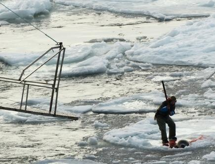 Photos: Canadian seal hunt spills blood on the ice in Gulf of St. Lawrence  (Photo: Sheryl Fink/IFAW): Buster Vision, Animal Rescue, Seals Hunting Slaught, Animal Cruelty, Hunting Spill, Animal Abusive, Help Animal, Canadian Seals, Sheryl Fink Ifaw