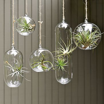Create a stunning and whimsical window display using hanging bubble terrariums and tillandsia air plants.  Both come in a variety of shapes and sizes and look gorgeous.  The air plants are super low maintenance.  Just mist them daily and submerge in water weekly