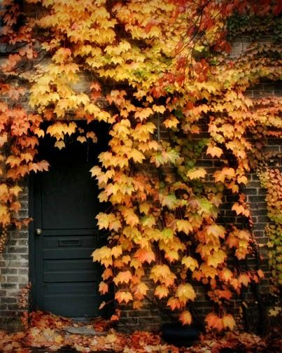 autumn: The Doors, Fall Leaves, Autumn Pictures, Hidden Doors, Autumn Leaves, Black Doors, Color, Beautiful, The Secret Gardens