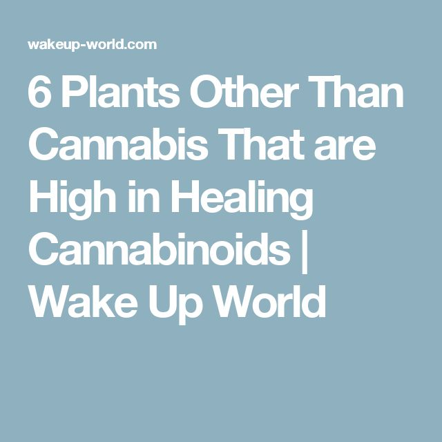 6 Plants Other Than Cannabis That are High in Healing Cannabinoids | Wake Up World