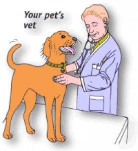 Aké utrpenie môžete spôsobovať zvieratám, ak by ste sa rozhodli študovať na Univerzite veterinárskeho lekárstva a farmácie v Košiciach (UVLF)?  Aké praktiky používajú niektorí veterinári, aké je kvality krmív, ktoré ponúkajú a z akých fariem môže pochádzať pekne zabalené mlieko, ktoré kúpite v supermarkete?  Pozor!!! Len pre silnejšie povahy...  http://martinchudy.blogspot.sk/2014/05/veterinarna-medicina-ako-ju-nepoznate.html