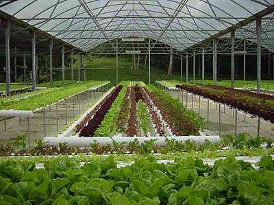 Thiết kế lắp đặt vườn rau sạch thủy canh tại nhà phố