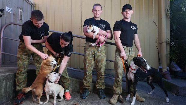 Australian Army recruits Sydney Dogs and Cats Home to banish injury blues.