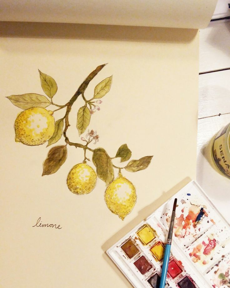 Lemons for a friend  Akvarell, citron, lemon