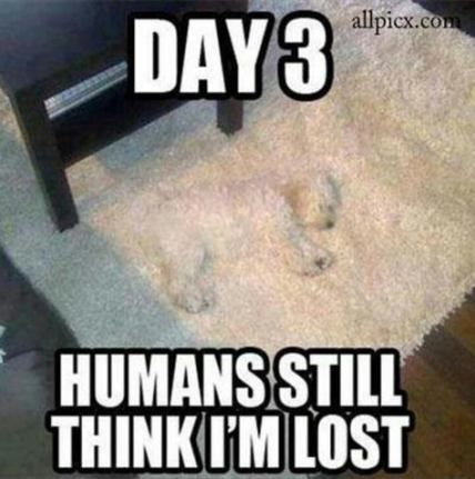 Funny Pet Memes Hilarious So Cute 36 Super Ideas