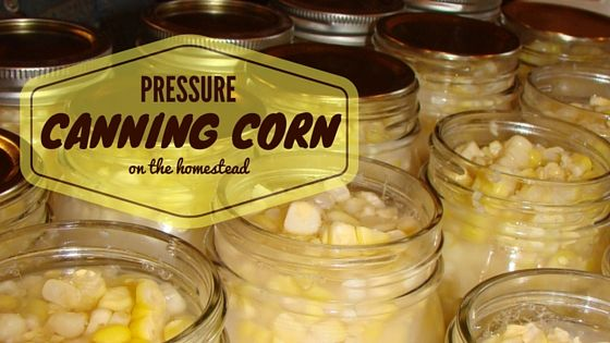 Pressure Canning Corn--I home canned corn for the first time in 2014.  While I still freeze some corn still on the cob, I will never go back to freezing the yearly supply of corn instead of canning it.