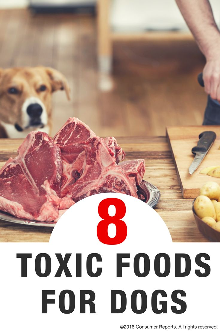 60 Best Food Safety Images On Pinterest Food Safety