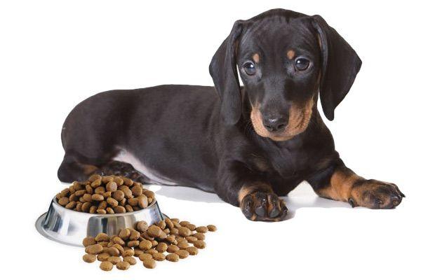 Bichón Maltés Alimentación Cuidados Y Curiosidades En 2021 Alergias En Los Perros Mejores Piensos Para Perros Educar A Un Perro
