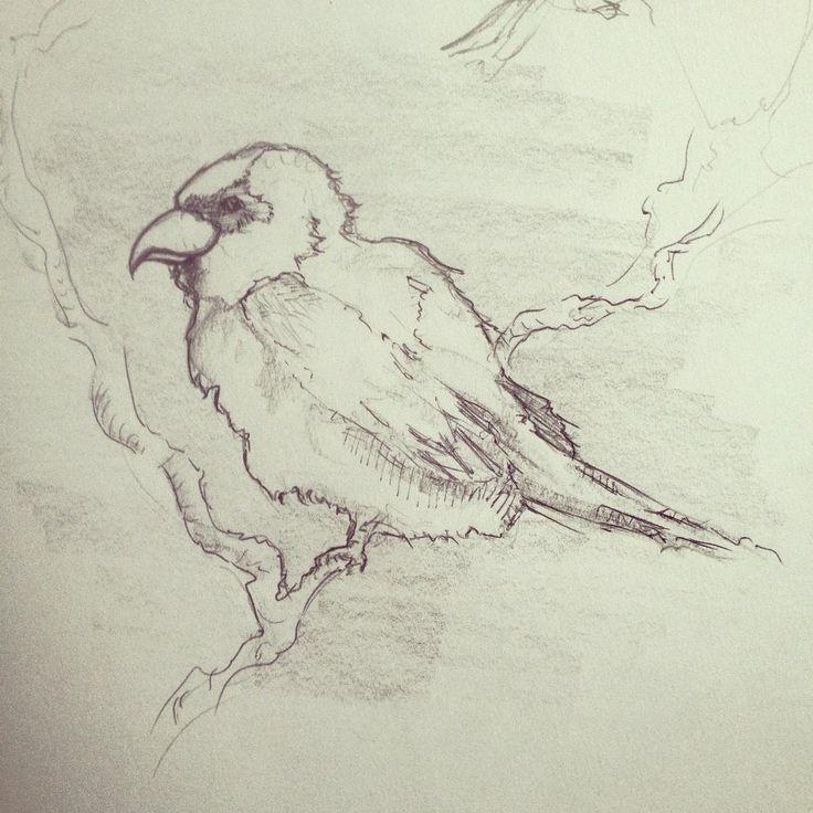 #bird #drawing