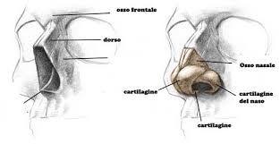 Risultati immagini per le vene del corpo umano per arte