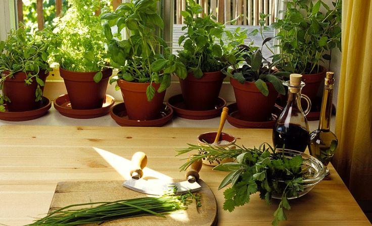 Les conseils pour bien cultiver ses plantes aromatiques