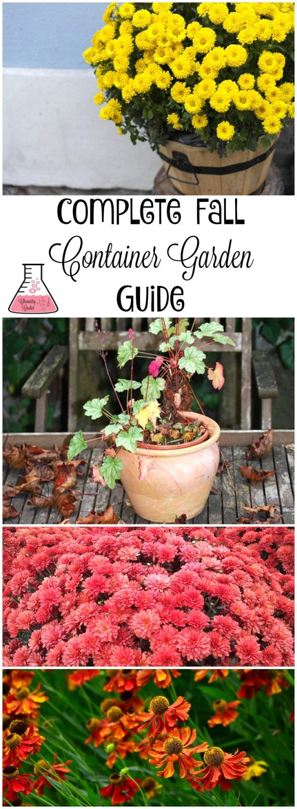 The Complete Fall Container Garden Guide In Three Steps