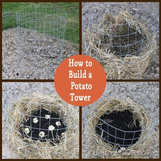 how to build a potato growing bin