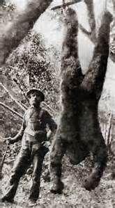 bigfoot - Bing images