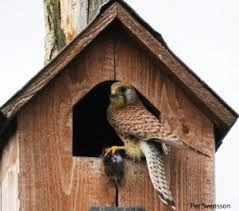 fuglekasser - Google-søgning