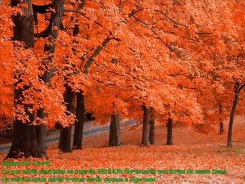 PREGADOR LUO - Árvore de Bons Frutos (APOCALIPSE 16)