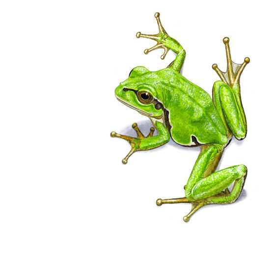 Green tree frog Greeting Card (code HA07) on Etsy, $4.88