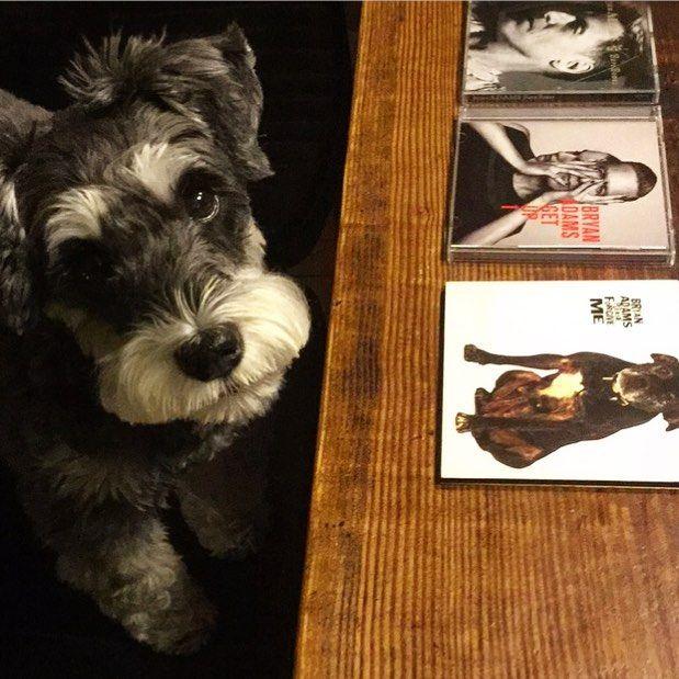 【 犬と音楽 】 dog & music / PLEASE FORGIVE ME / GET UP / Bare Bones by BRYAN ADAMS  若い頃から ブライアンの瞳と キーススコットの 色気のあるギターに に惹かれてます。 カッコイイおじさんに なっていて きっと加齢臭など しないのでは。 PLEASE FOR GIVE ME のPVは登場するワンコも メンバーもカッコイイ。 何度視聴したことか。 キラキラ輝く 純粋で真摯な瞳は おじさんになっても 健在です。  #artist#dog#doglover#dogandmusic#schnauzer#bryanadams#9cue#愛犬#音楽#シュナウザー#ブライアンアダムス