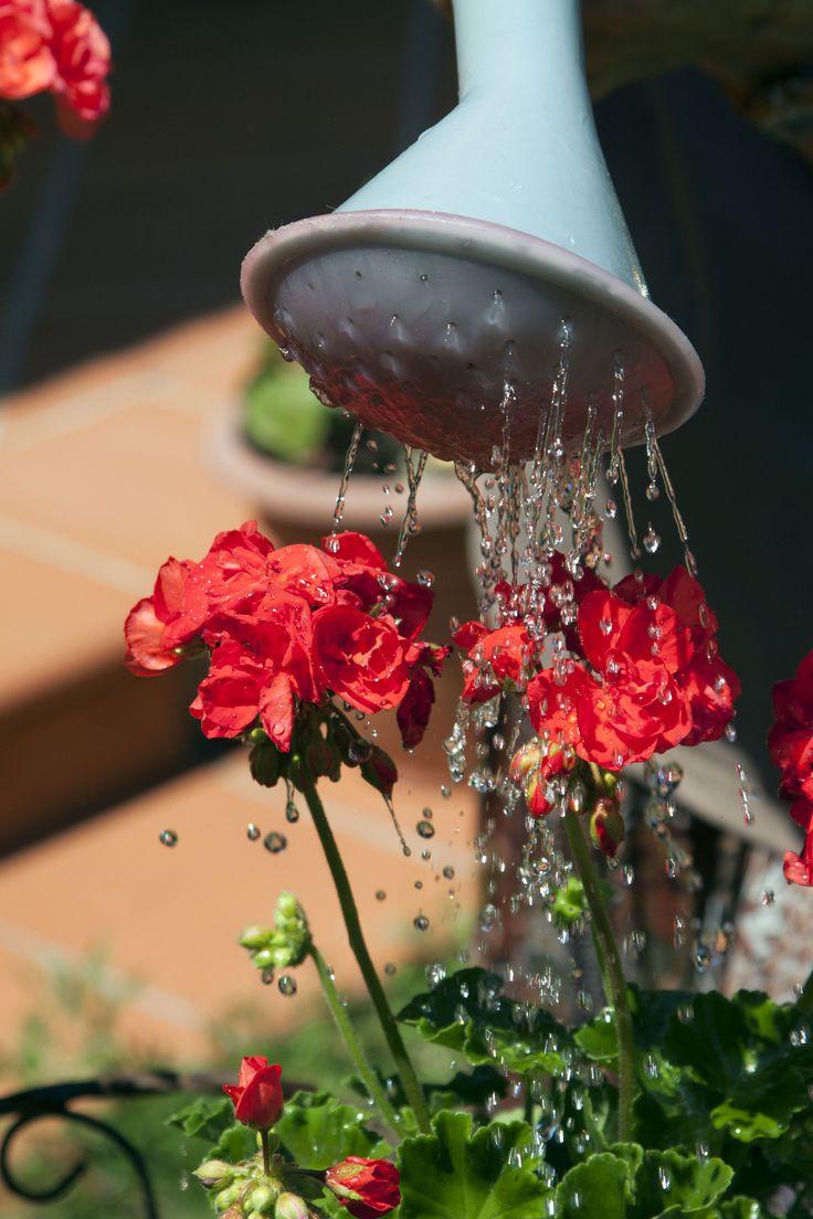 Outdoor Water Plants