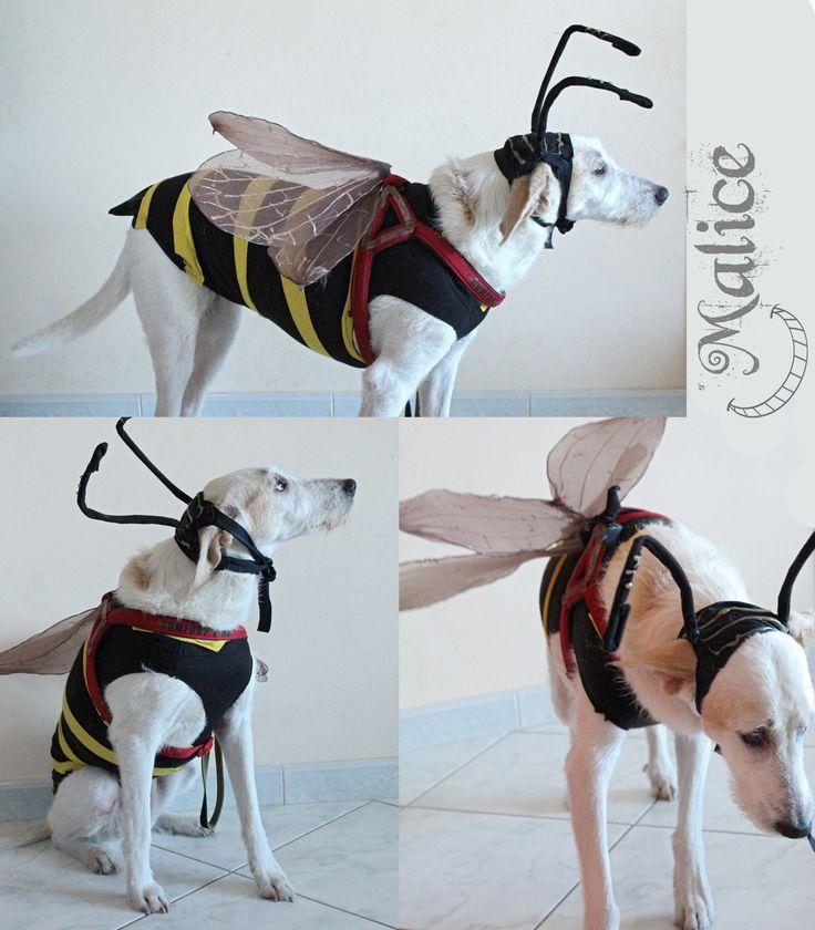 APE Costume di carnevale per cane.  I costumi devono essere indossati dai cani solo per brevissimi periodi e sempre sotto la supervisione attenta di un adulto.