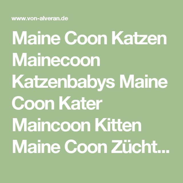 Maine Coon Katzen Mainecoon Katzenbabys Maine Coon Kater Maincoon Kitten Maine Coon Züchter großer Maine Coon Kater XXL Maine Coon von Alveran