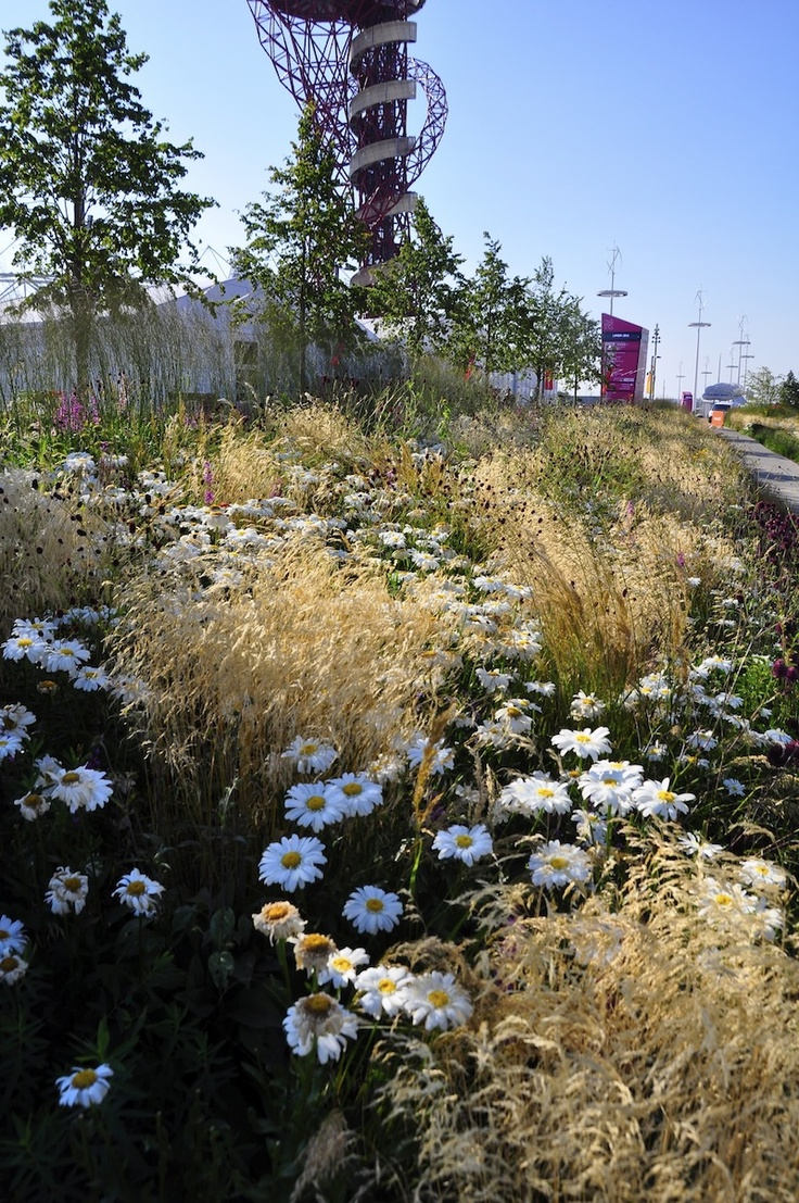 Nigel Dunnett also from Sheffield's Dept. of Landscape has designed a whole series of plantings based on British, European and east Asian plant communities. Some of these function as swales for absorbing water runnoff - an essential part of the SUDS - sustainable drainage system approach used at the Olympic Park. Photo credits: Nigel Dunnett