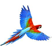 Parrot PNG Images On this site you can download free Parrot PNG image with transparent background.