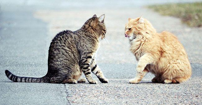I gatti sono asociali: lo spiega un esperimento