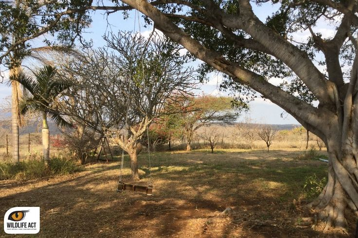 Where our conservation volunteers stay when working on Zululand Rhino Reserve. Find out more: http://bit.ly/1MVJWom