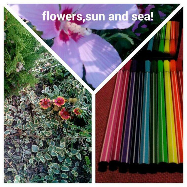 Sun flowers and sea