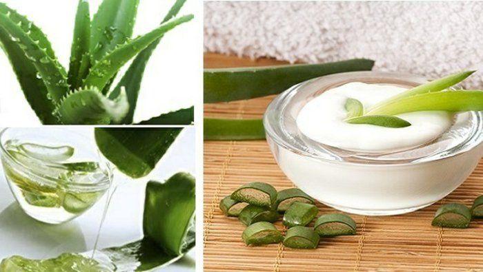 selbstgemachte Augencreme mit Aloe Vera Extrakt, Aloe Vera Gel, Aloe Vera Blätter