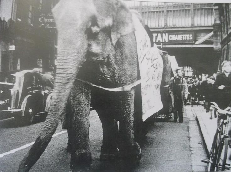 The Bertram Mills Circus Parade circa 1964. The big top was behind the old Atlas Foundry, Frankwell.