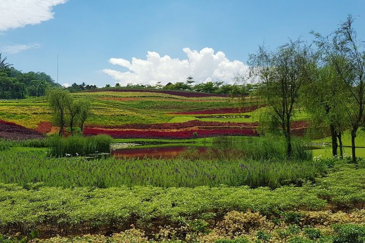 Flower Hills @ Vimala Hills