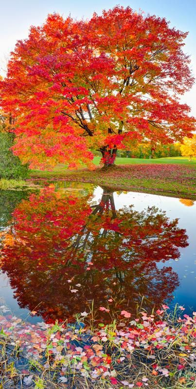 Maple Reflections | Jigsaw Puzzles, Games and Toys for Kids | PuzzleWarehouse.com