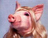 голова свинки