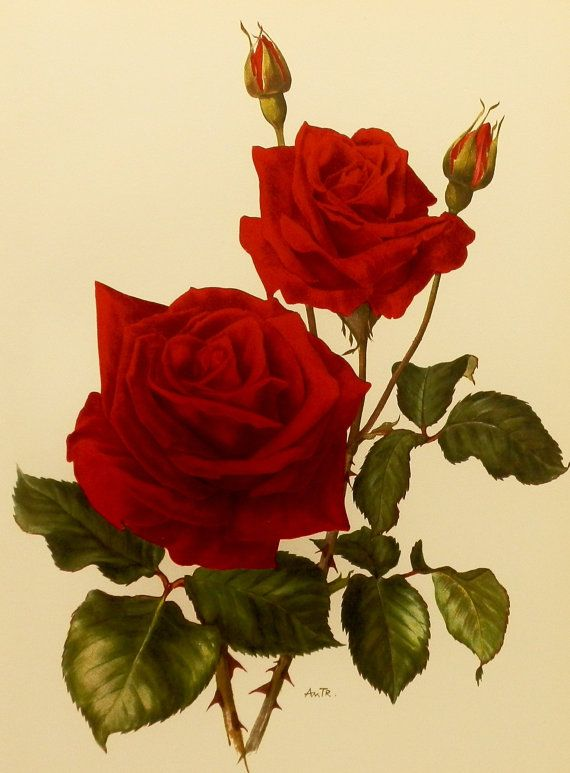 Best 25 Rose Prints Ideas On Pinterest Rose Print Dress