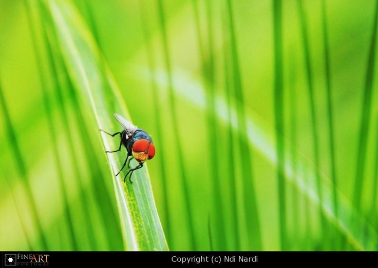 Bug6 by Ndi Nardi   FINEART-PORTUGAL