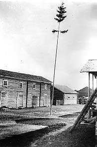 SKS vuotuisjuhlat: Juhannus. Juhannuskuusi, Kalajoki.  Samuli Paulaharju, 1924.  SKS 3490:3268.