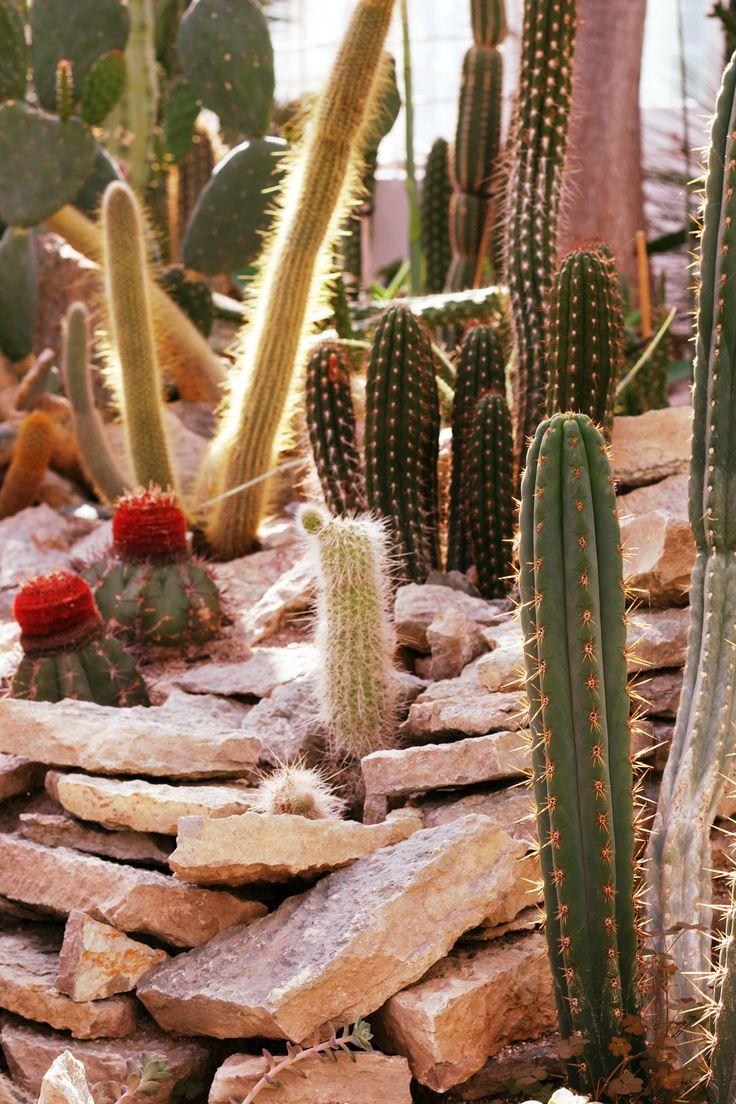 #cactus #botany #sun