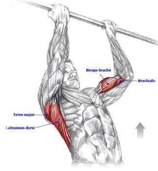 Pull Ups | Fitness Diagrams | Pinterest | Workout and Anatomy