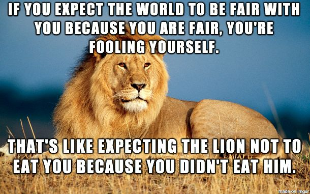 25 Lion Memes That Will Make You Feel Like a King