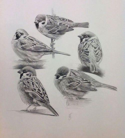 pin von jamal oualit auf imaginar  tierzeichnung vögel