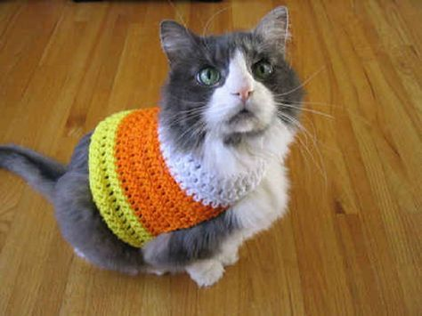 SHUT. THE. FRONT. DOOR. Tillie needs one. Crocheted candy corn sweater