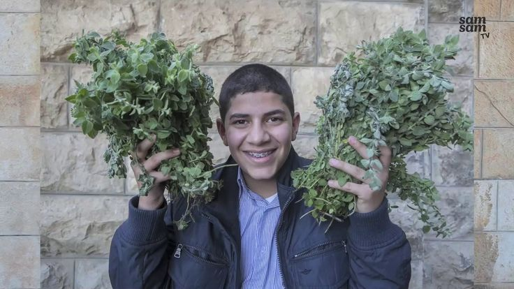 PALESTINA - Omar (12) uit Palestina is gek op za'atar. Op http://www.samsam.net/gek-op-groente/... vertelt Omar dat het kruid dan wel op een broodje moet zitten.