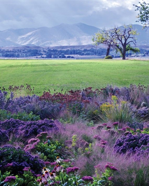 With the Colorado Rockies as a sweeping backdrop, Mary and Larry Scripter's bright prairie meadow provides birds, animals, insects, and joy. The couple relishes not only the garden's beauty but also the shared experience of making it grow.In fall, 'Purple Dome' and 'Bluebird' asters, 'Neon' and 'Matrona' sedums, and Ohio goldenrod bloom in their own haze of flowering 'Undaunted' ruby muhly grass, 'Little Bluestem' grass in its autumnal pink, and dried allium seed heads.
