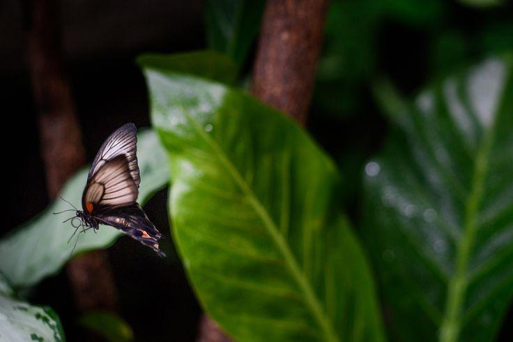 motyli v praze